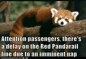 Attention passengers, there's a delay on the Red Pandarail line due to an imminent nap