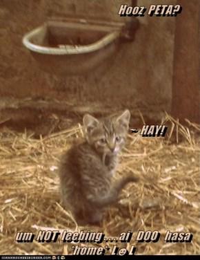 Hooz  PETA?                                      ~  HAY!  um  NOT  leebing . . . ai   DOO   hasa *home*  L☻L