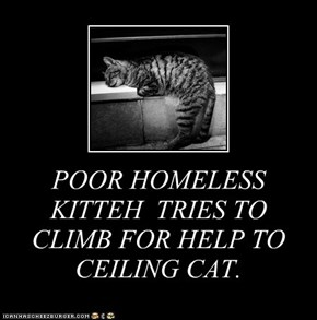 POOR HOMELESS KITTEH  TRIES TO CLIMB FOR HELP TO CEILING CAT.