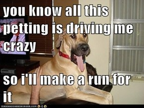 you know all this petting is driving me crazy   so i'll make a run for it
