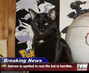 Breaking News - Zekrom is spotted in real life but is horrible.