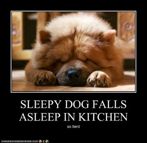 SLEEPY DOG FALLS ASLEEP IN KITCHEN
