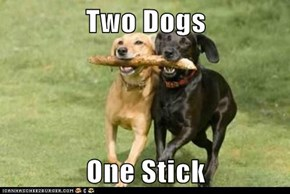 Two Dogs  One Stick