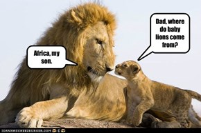 Dad, where do baby lions come from?