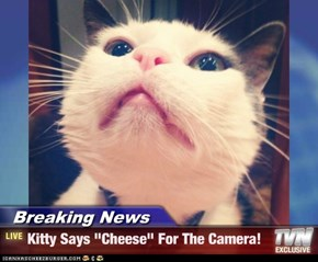 "Breaking News - Kitty Says ""Cheese"" For The Camera!"