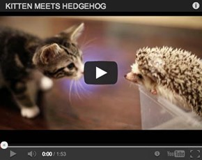 Around the Interwebz: Who is Cuter? Harley the Hedgehog or Loki the Kitten?