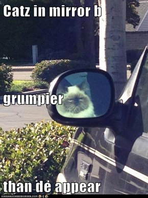 Catz in mirror b grumpier than de appear
