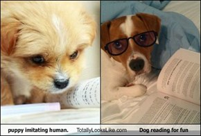 puppy imitating human. Totally Looks Like Dog reading for fun
