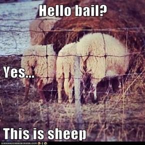 Hello bail? Yes... This is sheep
