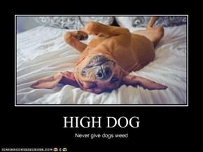 HIGH DOG