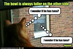 I wonder if he has tuna?