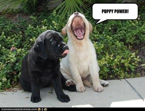 PUPPY POWER!
