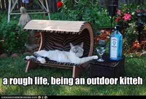 a rough life, being an outdoor kitteh