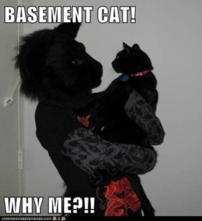 BASEMENT CAT!  WHY ME?!!