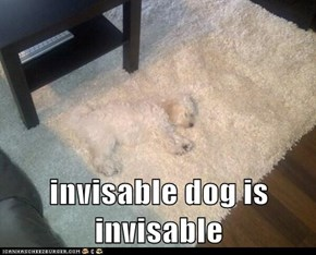 invisable dog is invisable