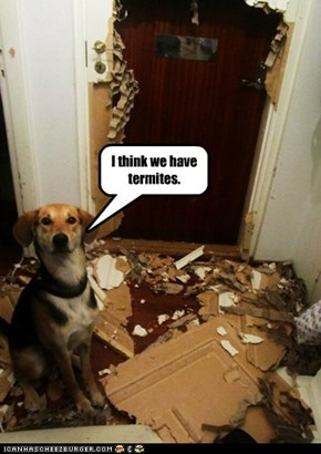 I think we have termites.