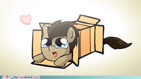 i am celebrity a madpony in a box