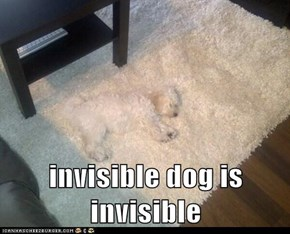invisible dog is invisible