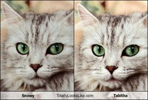 Snowy Totally Looks Like Tabitha