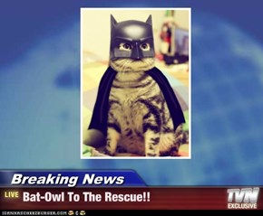 Breaking News - Bat-Owl To The Rescue!!