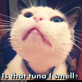Is that tuna I smell?