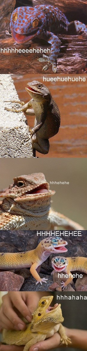What on Earth are These Lizards Laughing At?