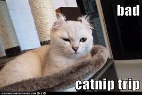 bad  catnip trip