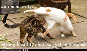 an·i·mouse·i·ty:  strong hostility obur hoo gets dat mouse