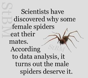 Biology 101: Spider Dudes Are Jerks