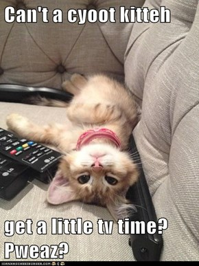 Can't a cyoot kitteh  get a little tv time? Pweaz?