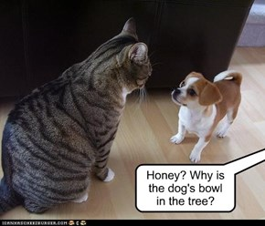 Honey? Why is  the dog's bowl  in the tree?