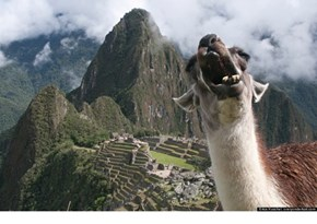 Machu Picchu Llama Photobomb