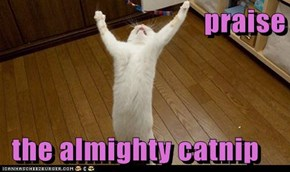 praise    the almighty catnip