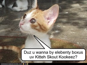 Kitteh Skout Kookeez? Yes please!