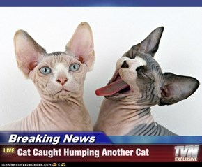 Breaking News - Cat Caught Humping Another Cat