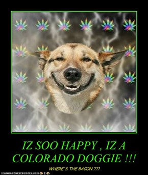 IZ SOO HAPPY , IZ A COLORADO DOGGIE !!!