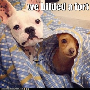 we bilded a fort