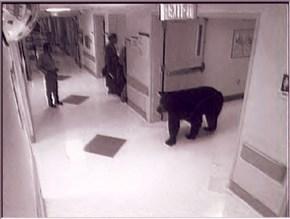 Hospital Visitor FAIL