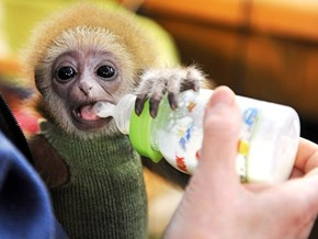 Around the Interwebs: The 10 Cutest Animals of 2012