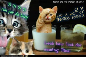 the majik kitten refreshment bootth at kso wintersport faire