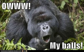 OWWW!  My balls!