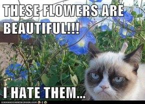 THESE FLOWERS ARE BEAUTIFUL!!!  I HATE THEM...