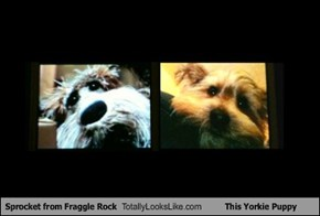 Sprocket from Fraggle Rock Totally Looks Like This Yorkie Puppy