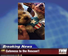 Breaking News - Cuteness to the Rescue!!