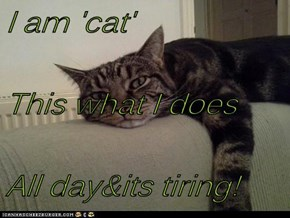I am 'cat' This what I does All day&its tiring!