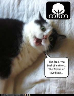 Cotton Spokescat