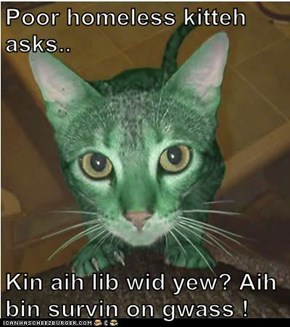 Poor homeless kitteh asks..  Kin aih lib wid yew? Aih bin survin on gwass !