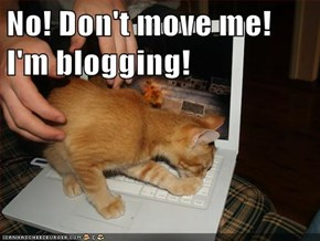 No! Don't move me! I'm blogging!