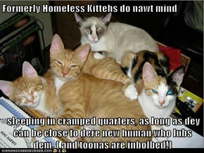 Formerly Homeless Kittehs do nawt mind   sleeping in cramped quarters, as long as dey can be close to dere new human who lubs dem. ( and toonas are inbolbed!)