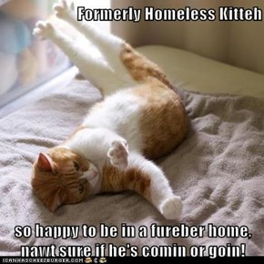 Formerly Homeless Kitteh